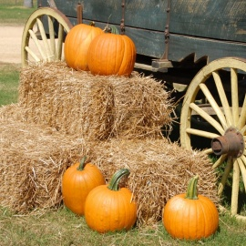 Fall Festivals in Jacksonville