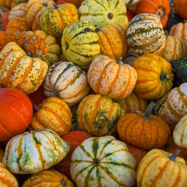 Fall Festivals in Denver