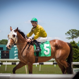 Road to the Kentucky Derby and other Stakes Races at Tampa Bay Downs