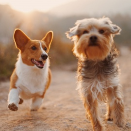 Pet-Friendly Neighborhoods in West Palm Beach