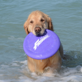 Bring Your Dog to the Best Paw Parks in Sarasota!