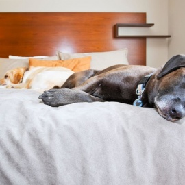 Pet Friendly Hotels in Ormond Beach