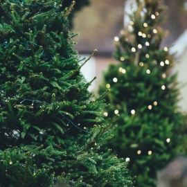 Where to Buy Christmas Trees in Charlotte