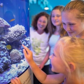 Indoor Attractions In Sarasota