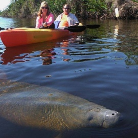 Manatee Park, Ft. Meyers   See Manatees, Kayaking, Fishing