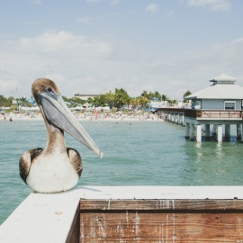 Things To Do in Fort Myers This Weekend | February 20th - 23rd