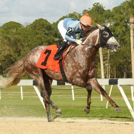 The Biggest Race of the Year at Tampa Bay Downs is Coming Up on Saturday, March 7
