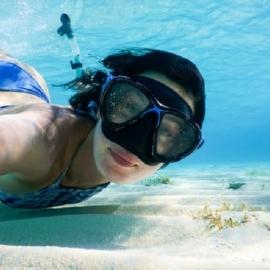 Florida Welcomes Back Annual Bay Scallop Season on Florida's Sports Coast