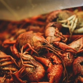 Crabs and Crawfish in Orlando | Shellfish, Lobsters, and More