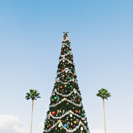Things To Do in Sarasota and Bradenton This Weekend | December 17th - 20th