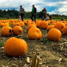 Where to Buy Pumpkins for the Halloween Season in Tampa