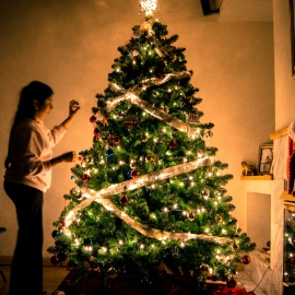 Where to Buy a Christmas Tree in Tampa | Markets, Farms, and More