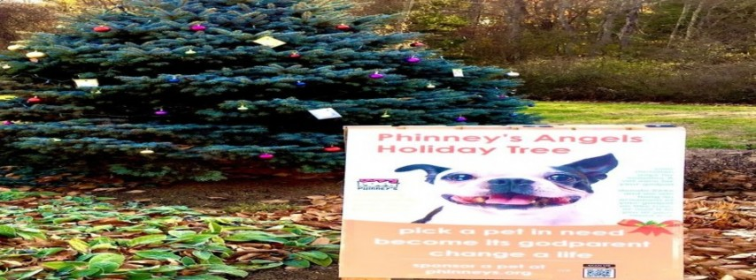 Walk the Historic Pierce House Estate Grounds to See Phinney's Angel Tree