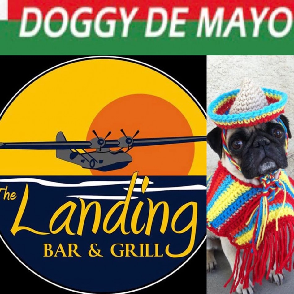 Doggy de Mayo at The Landing