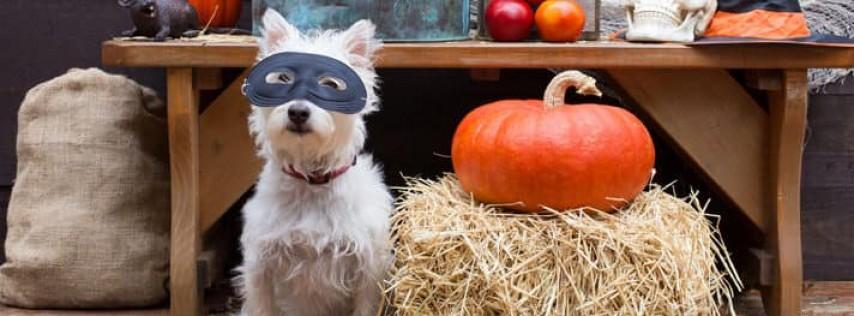Halloween Pawty!