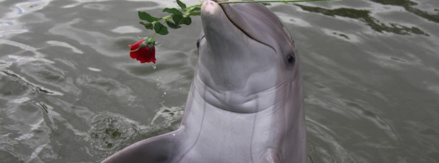 Toast and Dine Your Valentine at Dolphins Plus