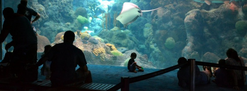 Father's Day Weekend at the Florida Aquarium