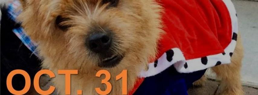 Doggy Costume Contest
