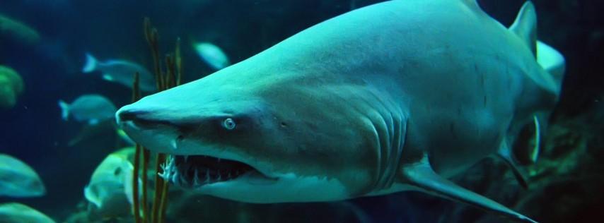 Shark Days at the Florida Aquarium