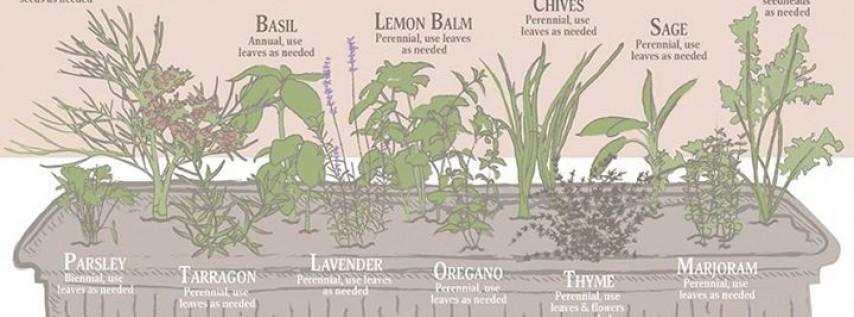 Herbs in the Florida Garden