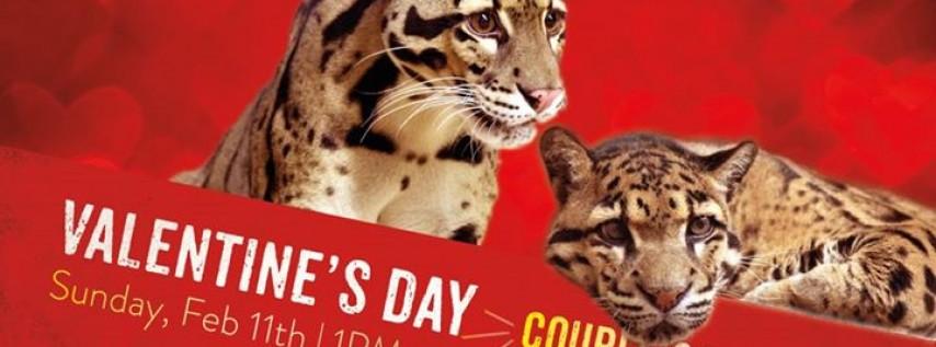 Valentine's Day Couples Tour.