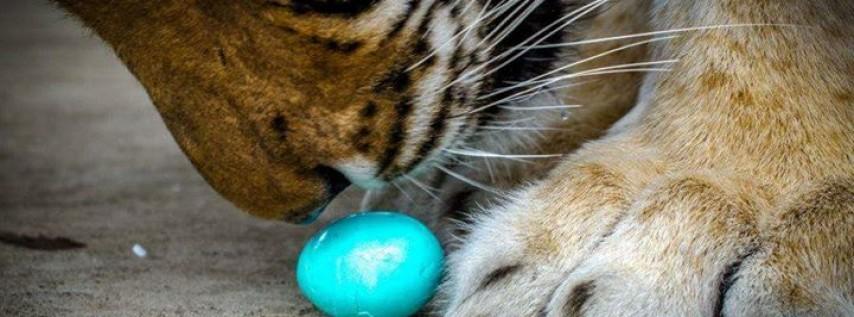 In-Sync Exotics Easter Egg Hunt