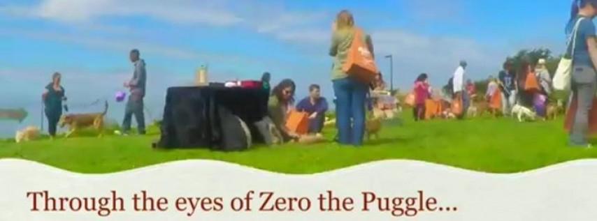 Easter Egg Hunt For Dogs