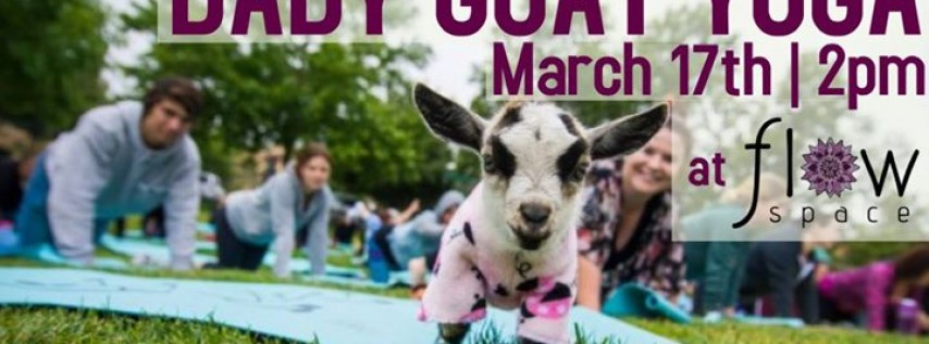 Baby Goat Yoga!