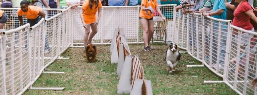 18th Annual Doggie Carnival
