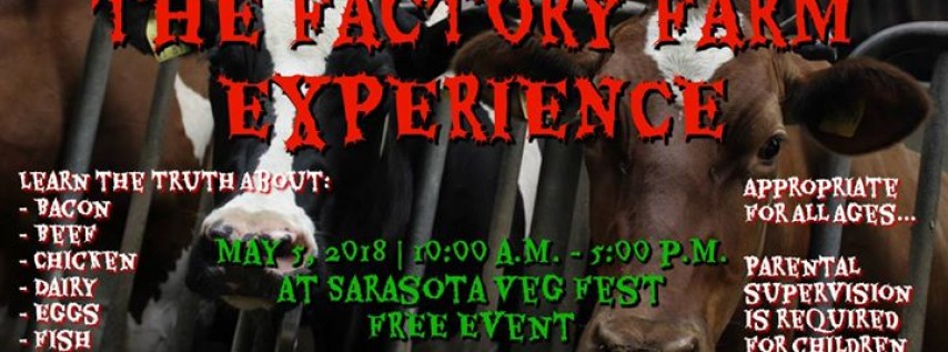 The Factory Farm Experience