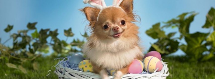 Pet Pics with Easter Bunny