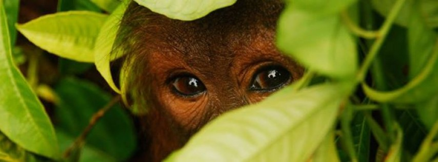 SOS Wildlife & Rain-Forests