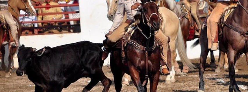 Mexican Rodeó Charreada Coleadero Bullriding @Fiesta West Texas