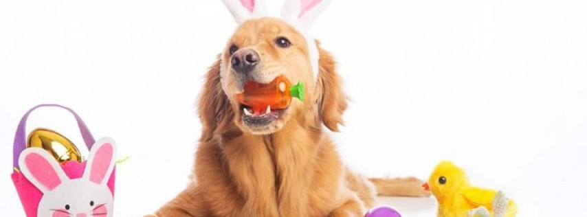 Dog-Gone Easter Egg Hunt & Bunny Brunch!