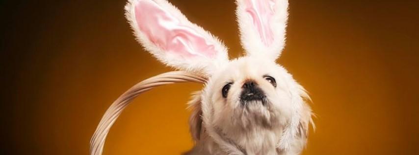 Avondale Estates Easter Egg Hunt and Dog Parade