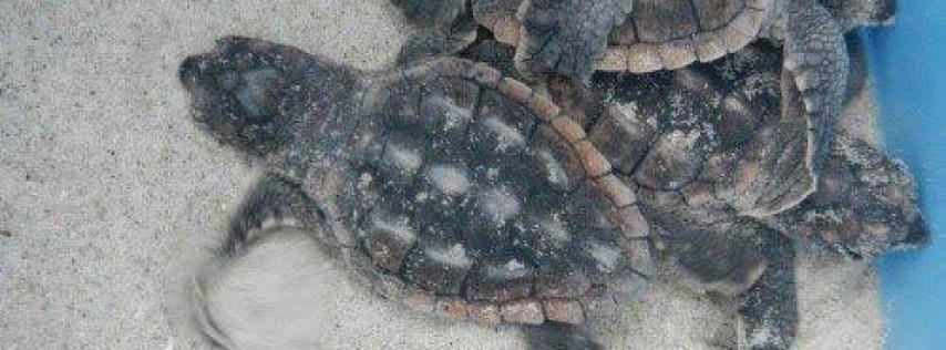2018 Turtle Trot on Tybee