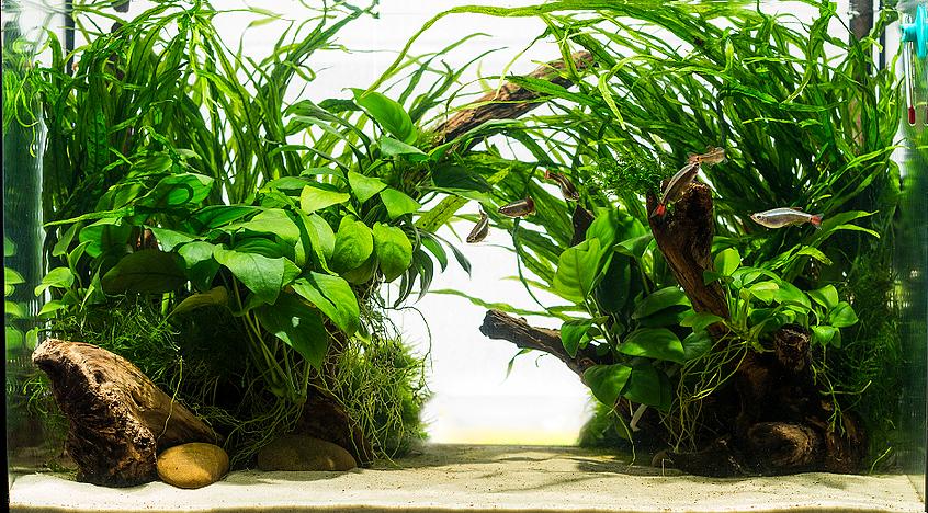 Aquarium Fish / Plant / Supply Auction