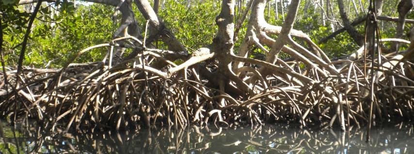 Adopt-a-Mangrove Workshop