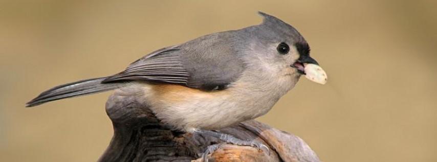 Creating Backyard Habitat for Birds