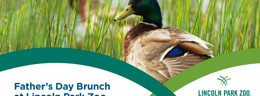 Father's Day Brunch at Lincoln Park Zoo