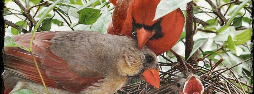 BIRDS AND BISCUITS AT IJAMS: Good Dads; Bad Fathers