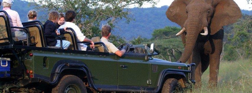 Discover South Africa in Sarasota