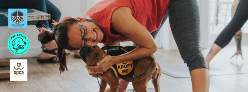 Rescue Dog Yoga with Pup Active and SPCA Tampa Bay