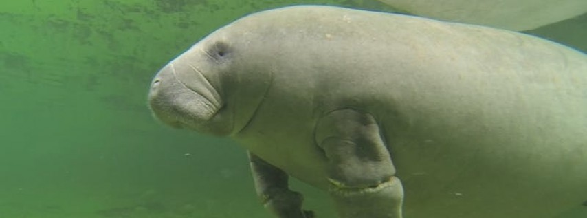 Blue Spring CleanUp for Manatees