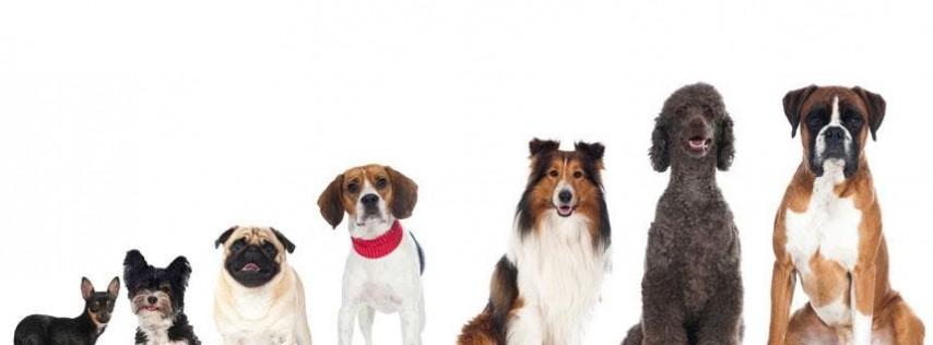 National Dog Day Celebration