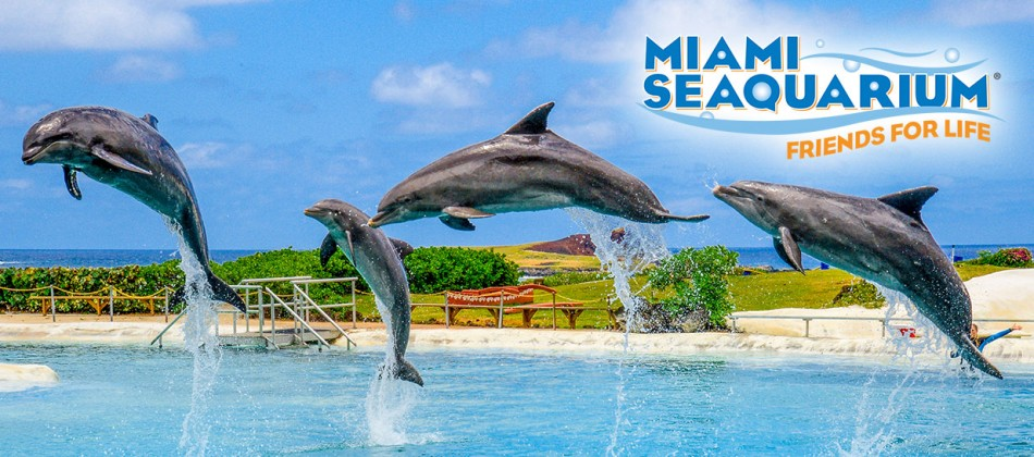 Florida Residents Dive into Animal Encounter Deals at Miami Seaquarium