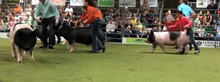 Swine Showdown in the Fort