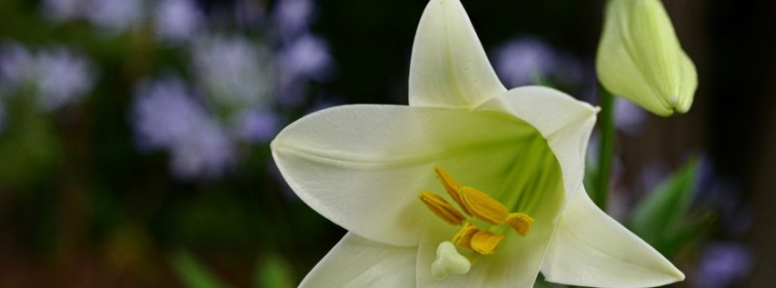 Choral Evensong for Lent