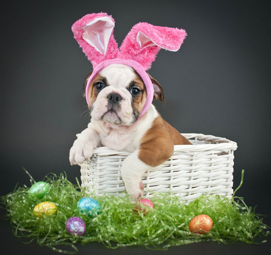 Pet Photos with the Easter Bunny at DAMC