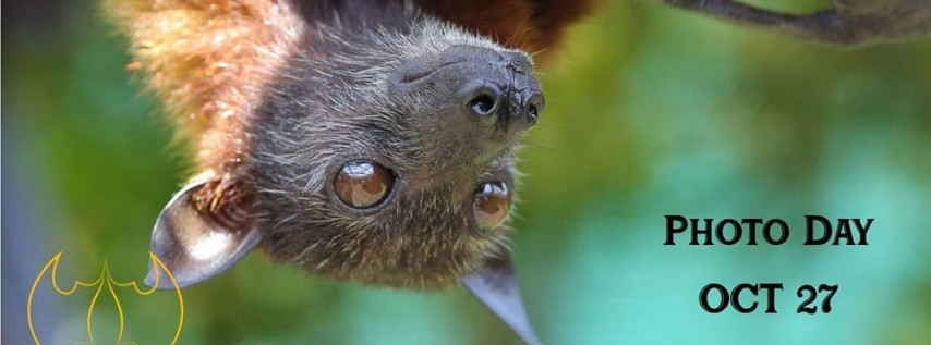Photo Day at Lubee Bat Conservancy